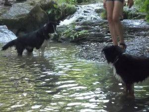 Baden mit den Hunden